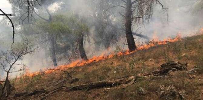 Ezine'de ormanlık alanda yangın: 1 hektar yandı